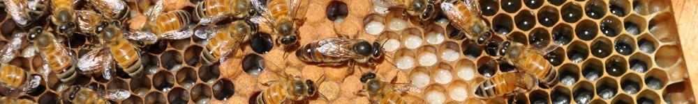 The Alamance County Beekeepers