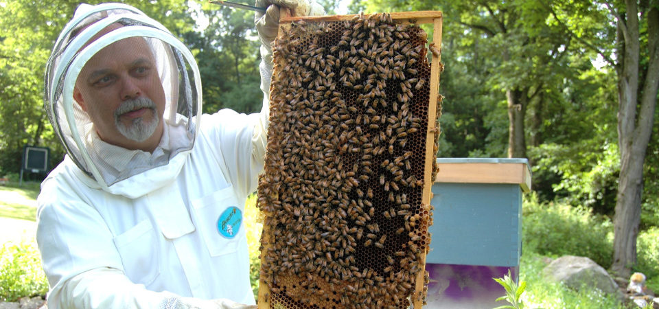 Beekeeper with frame